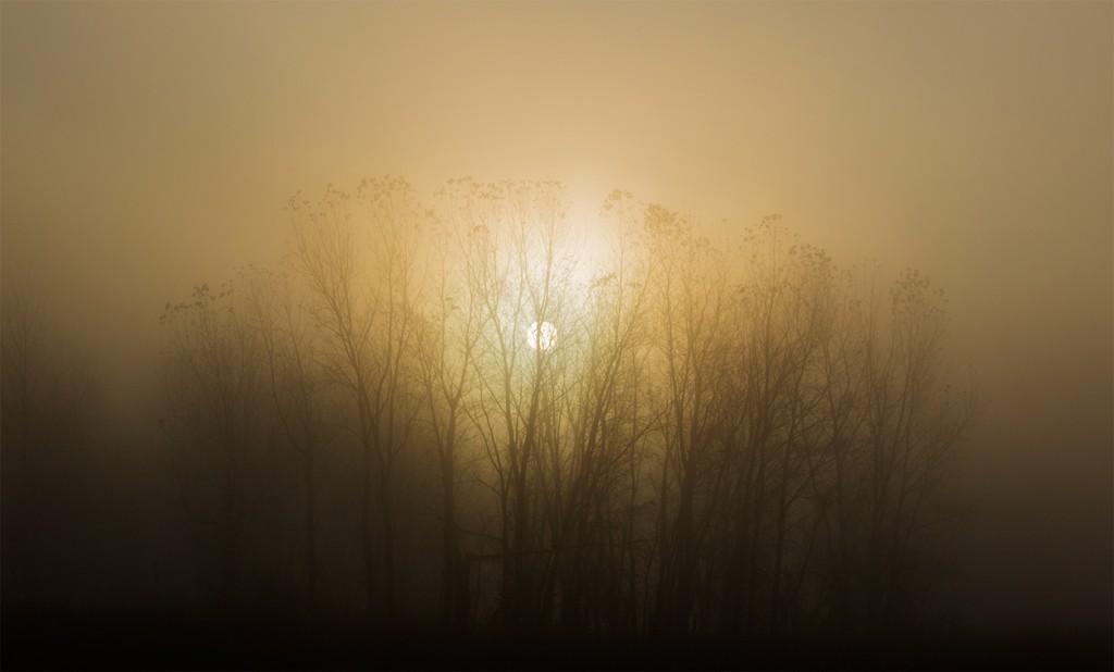 2015-11-03 GEP_4035 Fog
